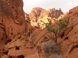 photo at Valley of Fire State Park
